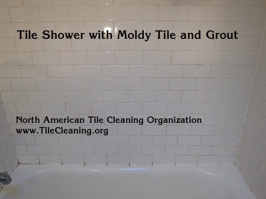 How to Get Rid of Stubborn Bathroom Mold - Free Articles Directory
