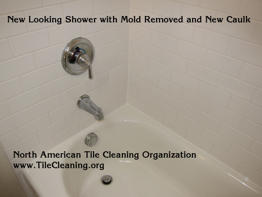 How to Remove Mold - Removing Mold, Even Black Mold Removal, Fast